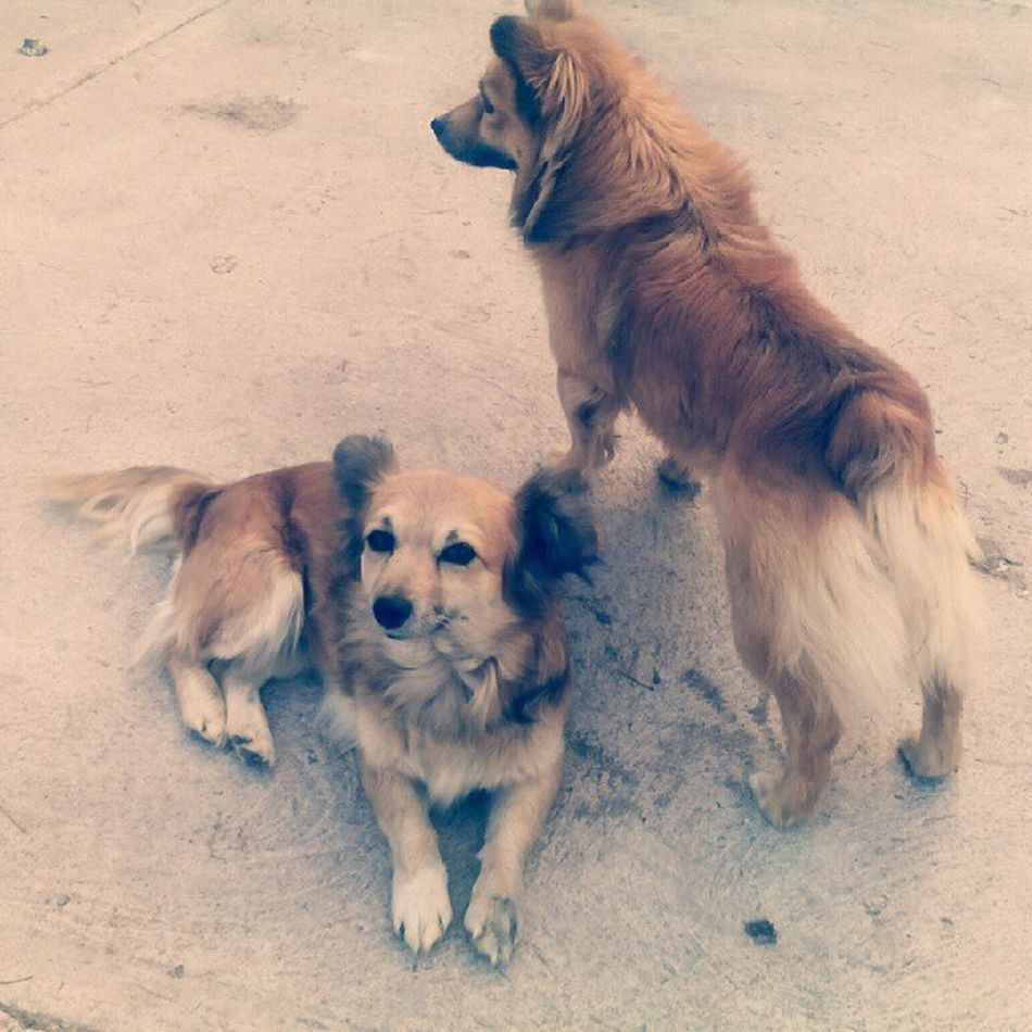 "😍👌 My two dogs. I've called one of them ""Alien"" because of Tokio Hotel 💓 Doris Alien Rest Onguard Love Dogs Streetdogs Mom Son AsMotherAsSon Family Pets TokioHotelTour TokioHotel TokioHotel TokioHotelIsBack Tokiohotelinstagram Aliens Mexico Mexican Animals Crazy Looovee"