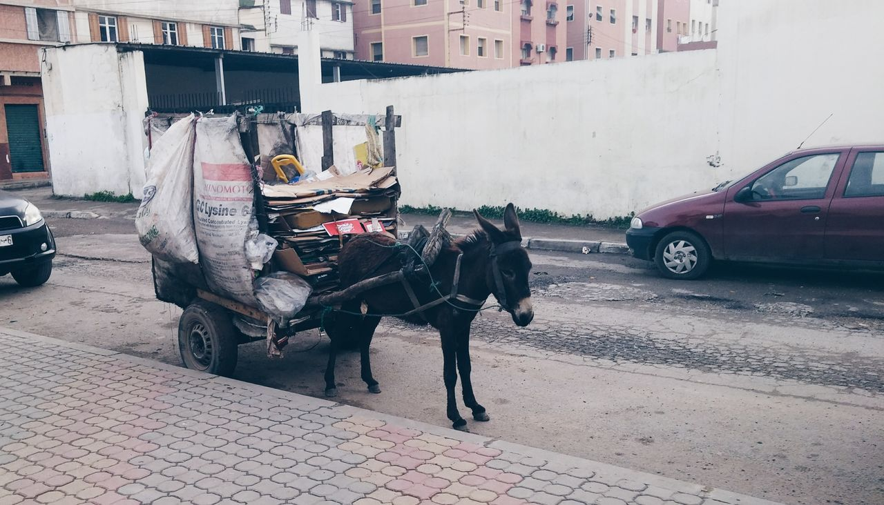 Moroccan Uber 🤣👌🚕 🇲🇦 Ride Ride Or Die Transportation Moyen De Transport Modern Life Transport Transporter Streetphotography Urban Development City Life Big City Life Donkey Donkey Time Donkey Rides Mobilephotography Shootermag AMPt_community Vscocam VSCO Snapshots Of Life Visual Witness On The Road City Street Life
