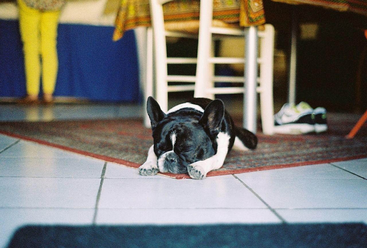 Zzzz... 35mm Pets Domestic Animals Animal Themes Analog Film EyeEm Best Shots Ishootfilm Filmisnotdead Film Photography Filmfeed 35mm Film Dog Frenchbulldog One Animal Tranquil Scene