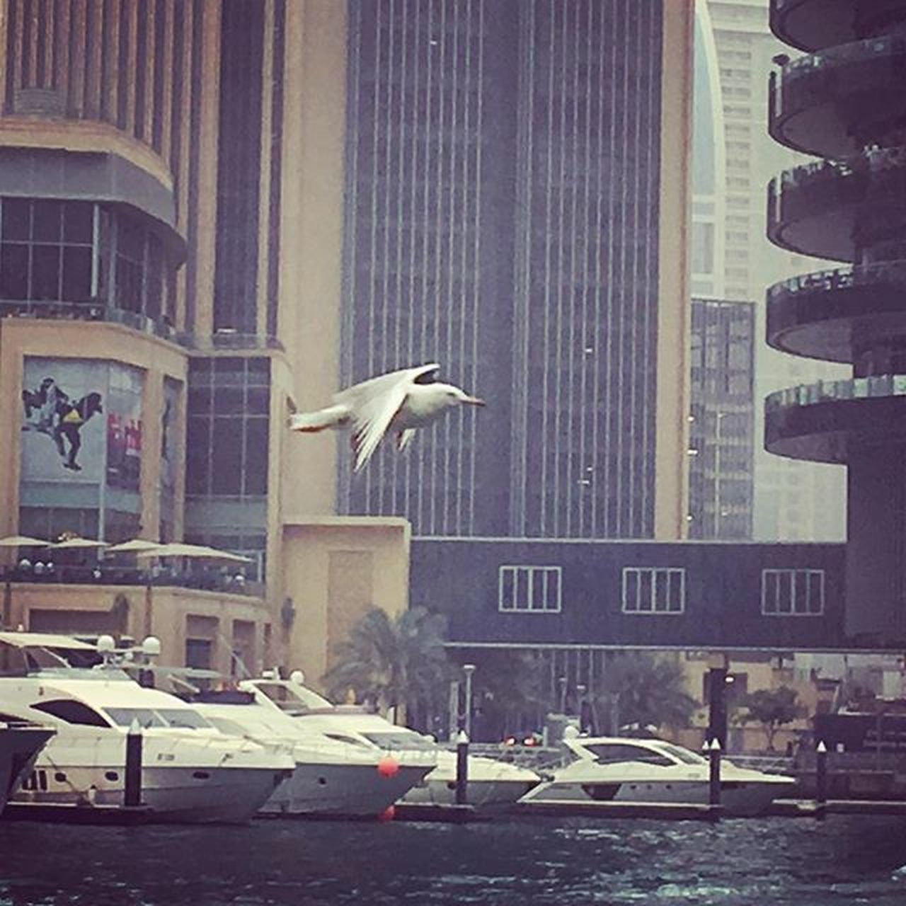 Animal Themes Animal Wildlife Animals In The Wild Architecture Bird Building Exterior Built Structure City Day Dubai Dubaifestivalcity Dubaimarina Dubaimarinawalk DXB Fountain IPhone Iphone6 IPhoneography Iphoneonly Iphonesia Marina Nature Nature_collection No People Outdoors