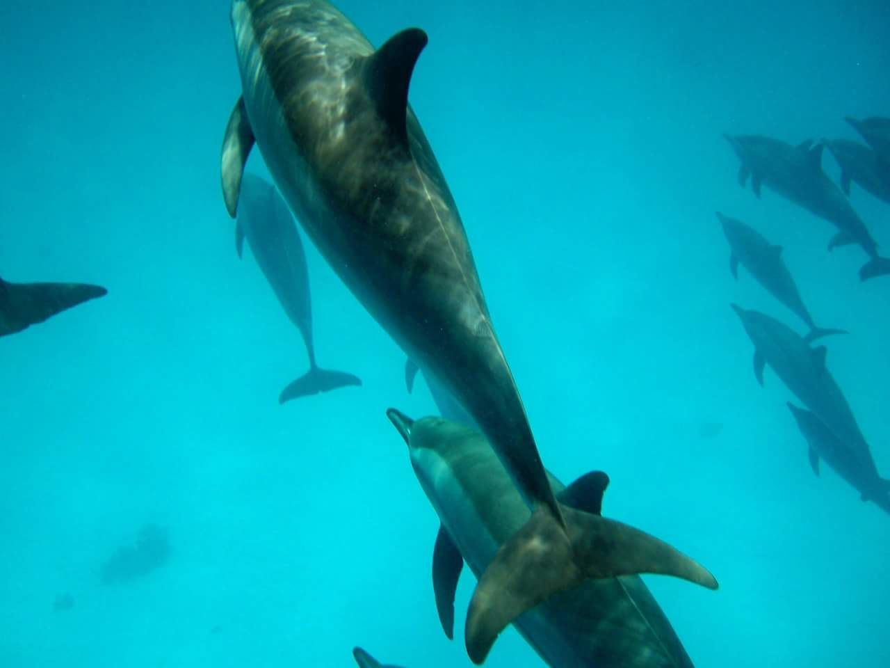 fish, animal themes, sea life, animals in the wild, underwater, nature, no people, animal wildlife, shark, blue, swimming, undersea, water, sea, day, beauty in nature, outdoors, mammal