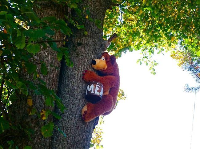 :-) Bear Honey Funny Funny Moments Funny Pics Funny Pic Random Randomshot Random Shots EyeEm Eye4photography  Eyemphotography EyeEm Gallery Learn & Shoot: Balancing Elements Tree Passed By Moments Winnie The Pooh  Winniethepooh Fine Art Things I Like