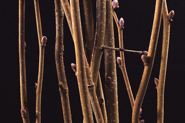 Hazelnut Twigs Tree Bark Texture Close-up Day Hazelnut Human Hand On Black Outdoors People