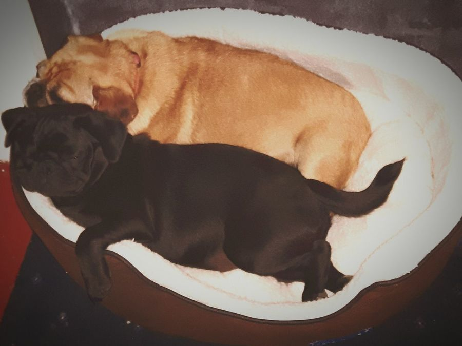 Taking Photos Check This Out Pugs Puglife How Cute Best Friends Comfy And Cozy