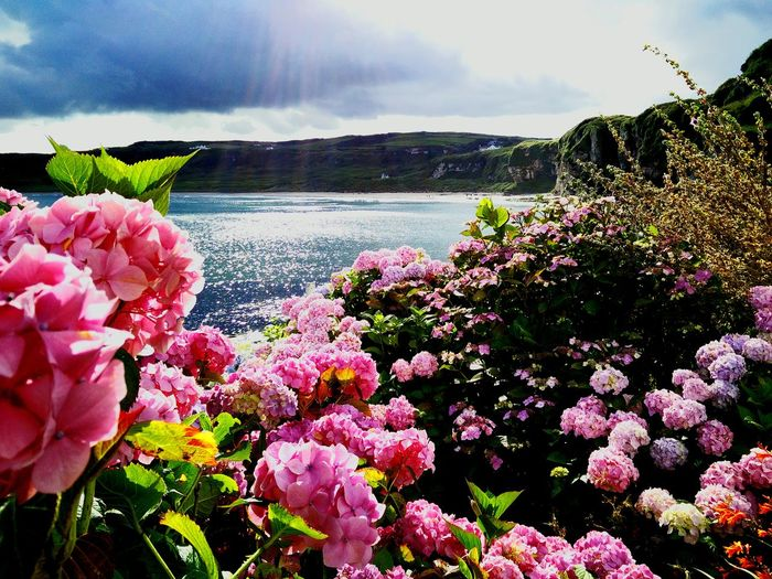 Sea & Flowers Beautiful Northern Ireland First Eyeem Photo