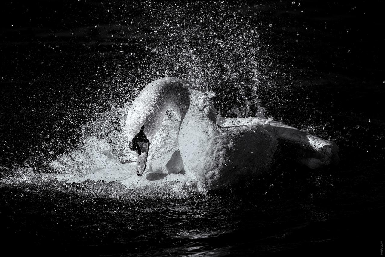 Animal Themes Animals In The Wild No People One Animal Splashing Spraying Water Waterfront
