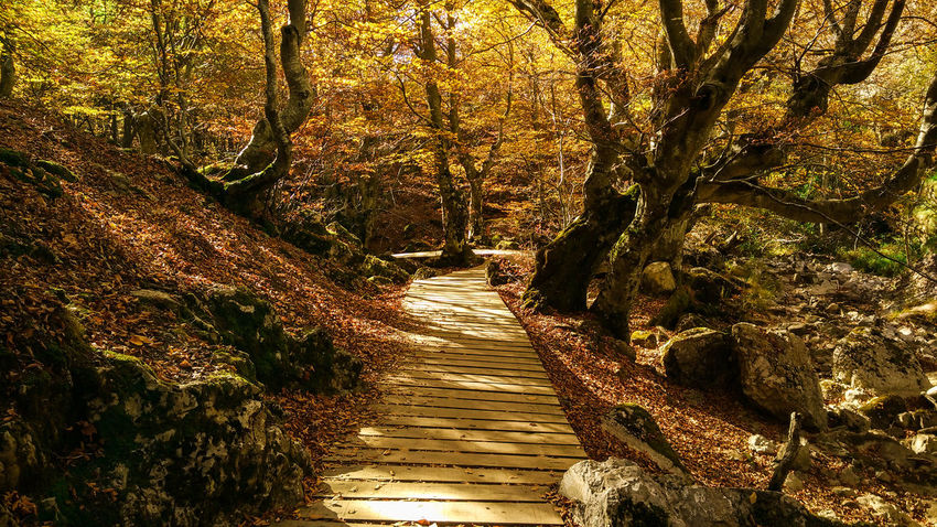 Nature Outdoors Sunlight Autumn Autumn🍁🍁🍁 Tree Autumn Trees Autumn Path Nature Path Nature Pathway Autumn Colors Autumn Colours Autumn Colors Nature Autumn Colors,