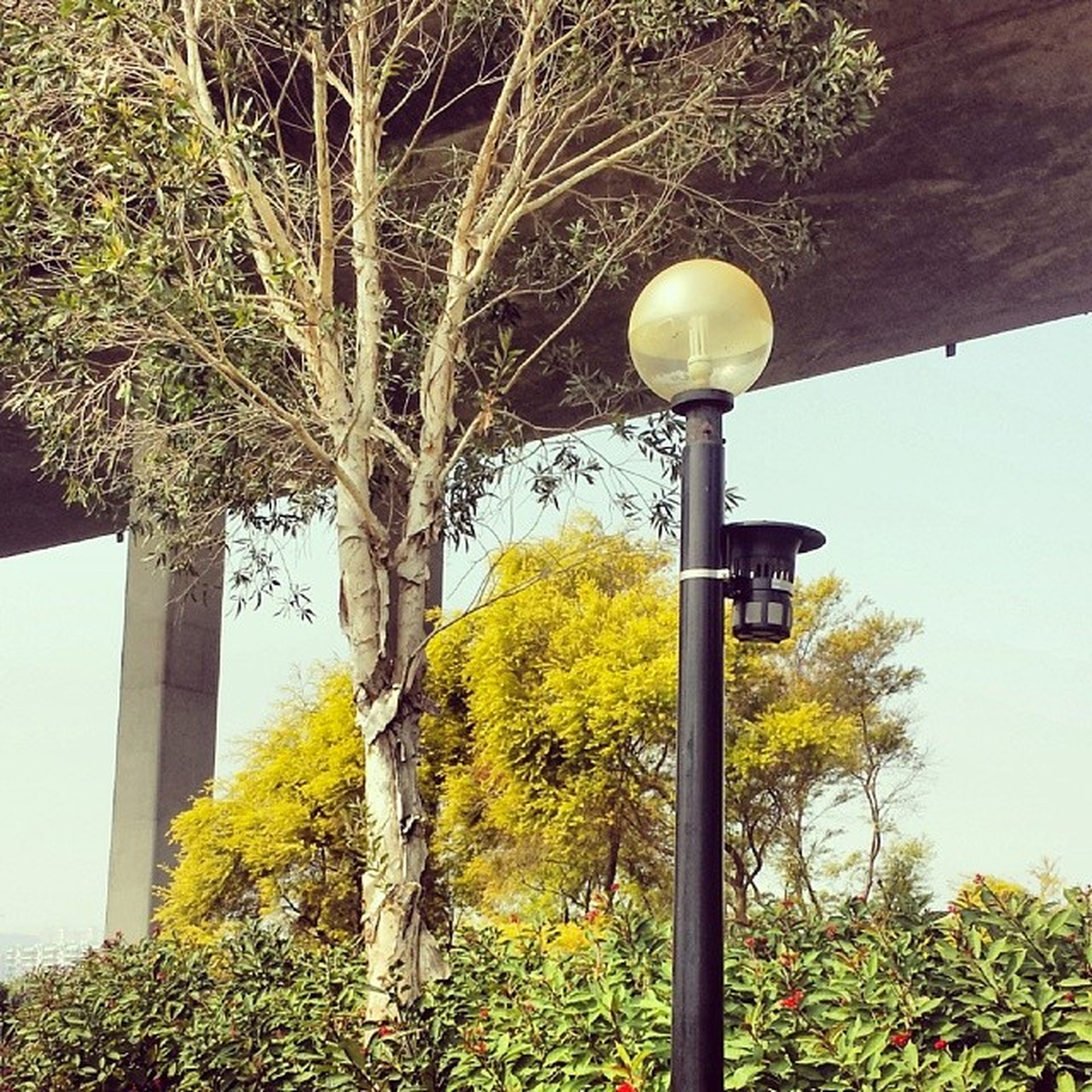tree, low angle view, street light, lighting equipment, growth, built structure, architecture, branch, clear sky, plant, day, building exterior, green color, outdoors, nature, sky, no people, sunlight, lamp post, electric light
