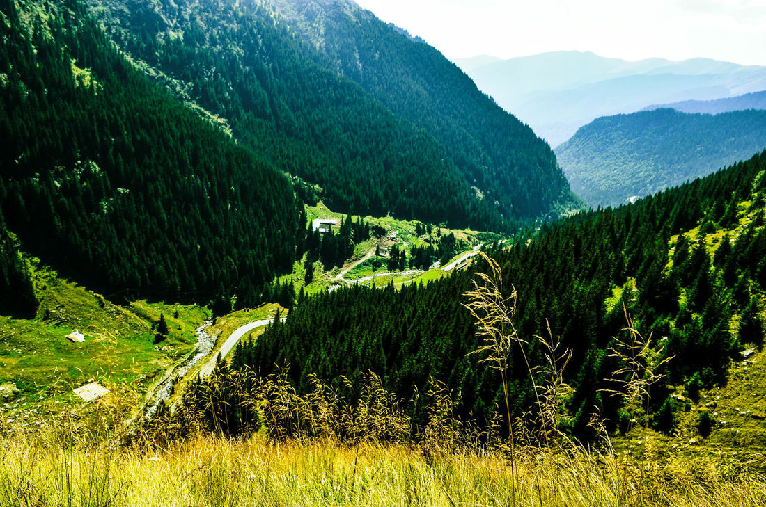 Field Grass Green Nature Road Romania Greenery Hills And Valleys Landscape Mountains Nature Beauty Roadtrip Travel Destinations