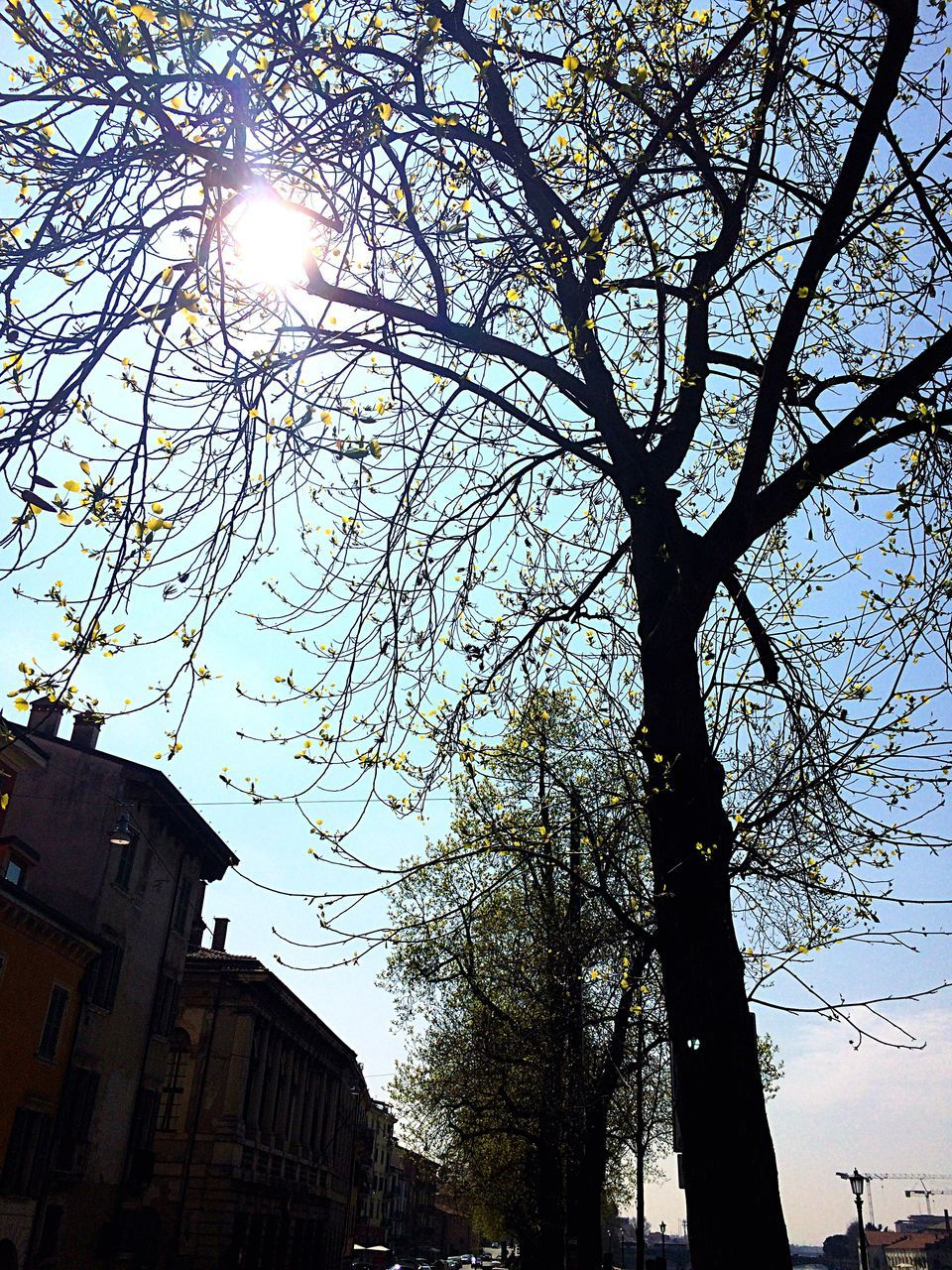 tree, architecture, low angle view, built structure, lens flare, sunlight, building exterior, sunbeam, sun, day, outdoors, branch, no people, sky, nature, bare tree, clear sky