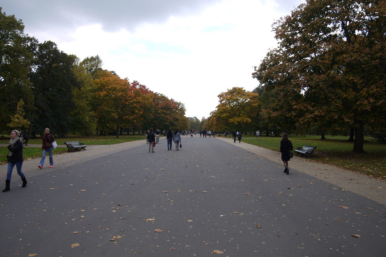 autumn, tree, leaf, change, nature, the way forward, walking, outdoors, sky, road, day, park - man made space, beauty in nature, large group of people, real people, growth, scenics, men, full length, people, adult