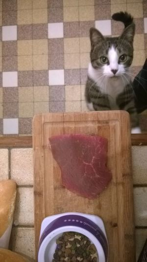 Begging Cat Cat Wants Meat Cooking Fresh Meat Hungry Cat