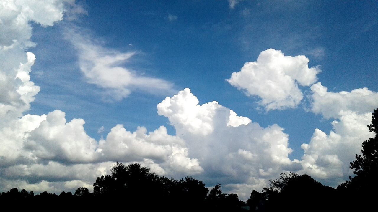 Tree Scenics Beauty In Nature Sky Low Angle View Tranquility Tranquil Scene Nature Blue Cloud - Sky Cloud Day Growth Treetop Outdoors Majestic Non-urban Scene Cloudscape Outline High Section