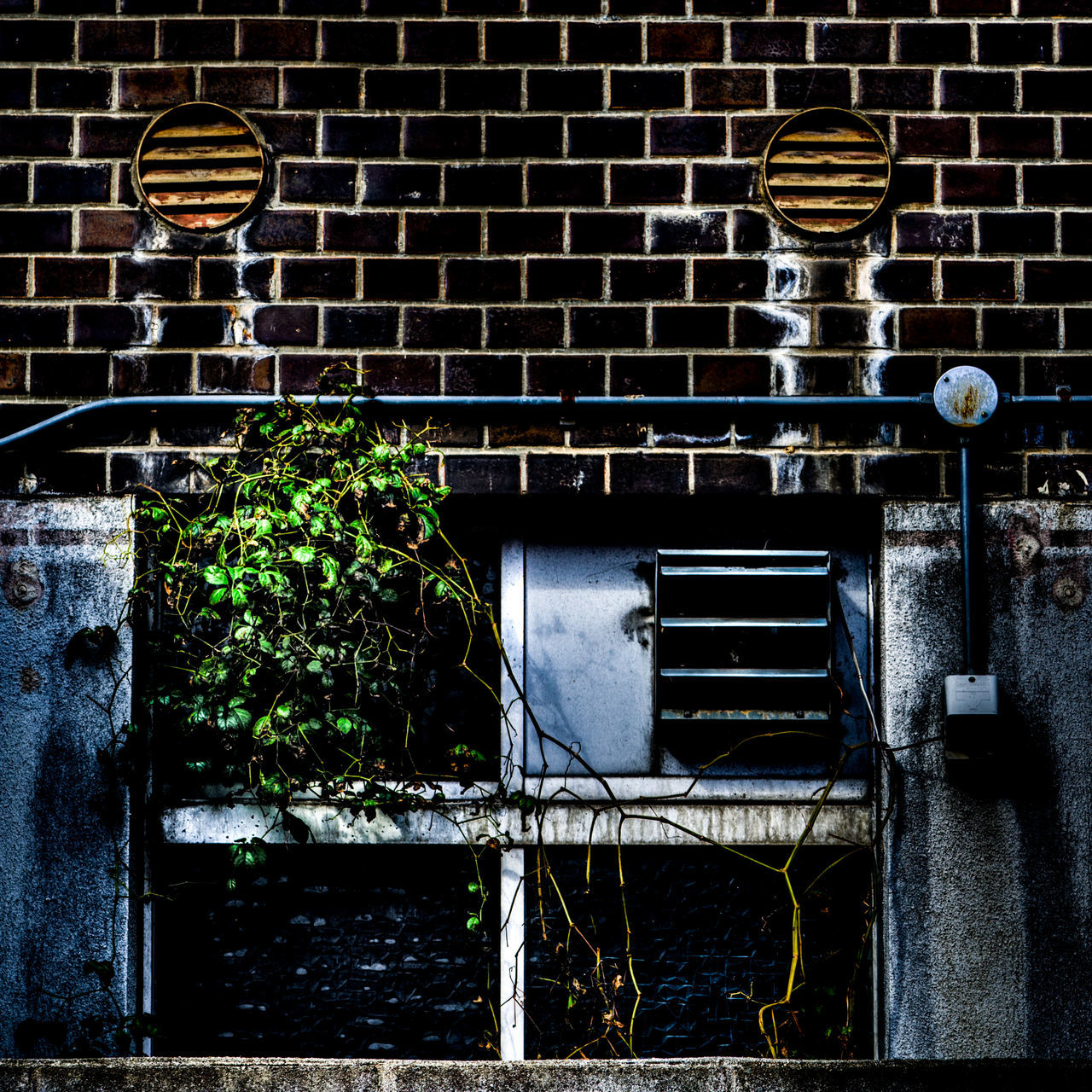no people, architecture, brick wall, built structure, day, outdoors, plant, building exterior