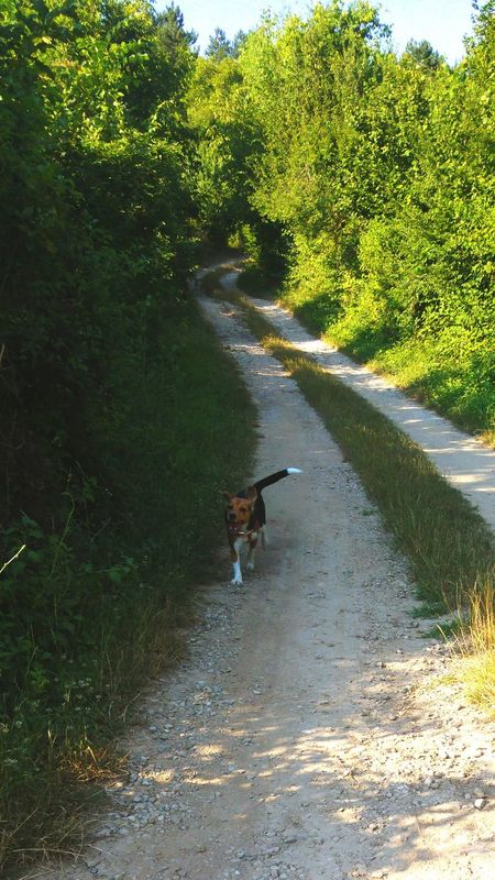 Beagle Crazybeautiful Freedom