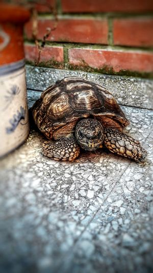 Tortuga 🐢 One Animal Animal Themes Animals In The Wild Reptile Day Animal Wildlife Outdoors Nature No People Close-up Tortoise Eyemphotography Mammal .