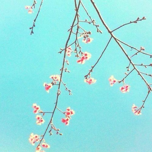 Minimalism Minimalobsession EyeEm Best Shots Welcome To My Garden