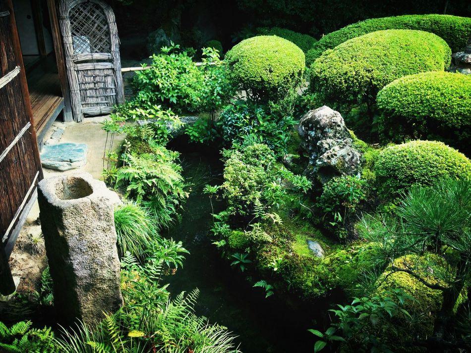 Temple Japanese Garden Plants Green