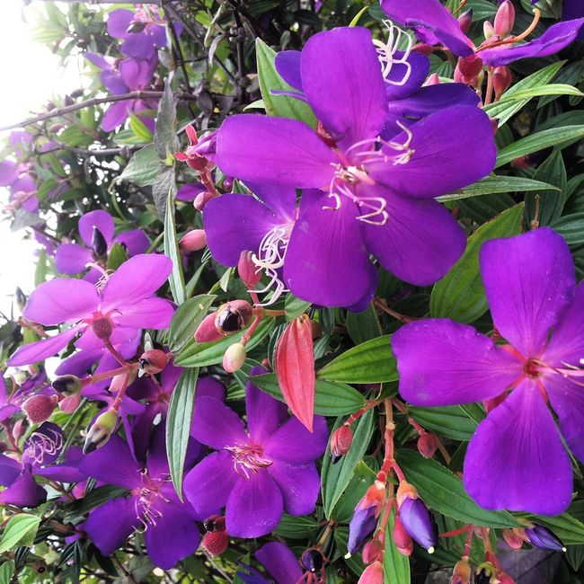 Petals Flutter Spring Flowers Flower Collection Purple Flower