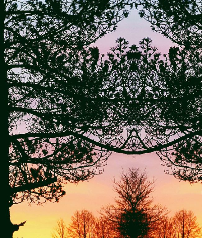 looking for the beauty and symmetry in the nature Nature Sunset Sky Tree No People Silhouette Beauty In Nature Outdoors Branch Scenics Day Andreas Own Creation Welcome To Black