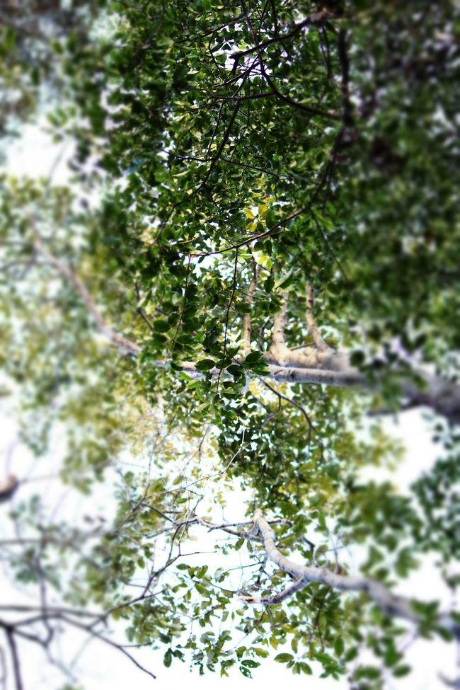 鷹羽ヶ森 Green Forest