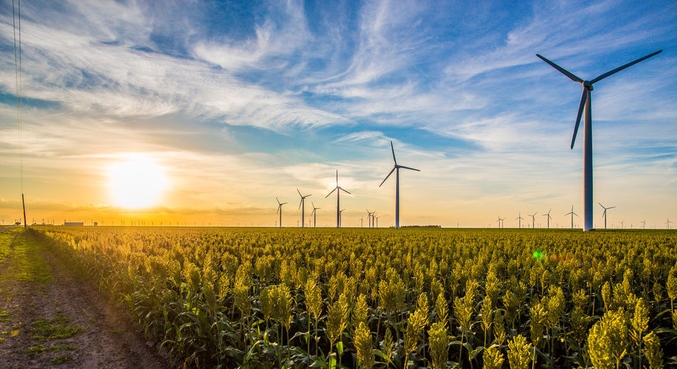 Agriculture Alternative Energy Beauty In Nature Crop  Environmental Conservation Farm Field Flower Fuel And Power Generation Landscape Nature Plant Rural Scene Scenics Sky Sun Sunset The Color Of Technology Tranquil Scene Wind Power Wind Turbine Windmill TakeoverContrast