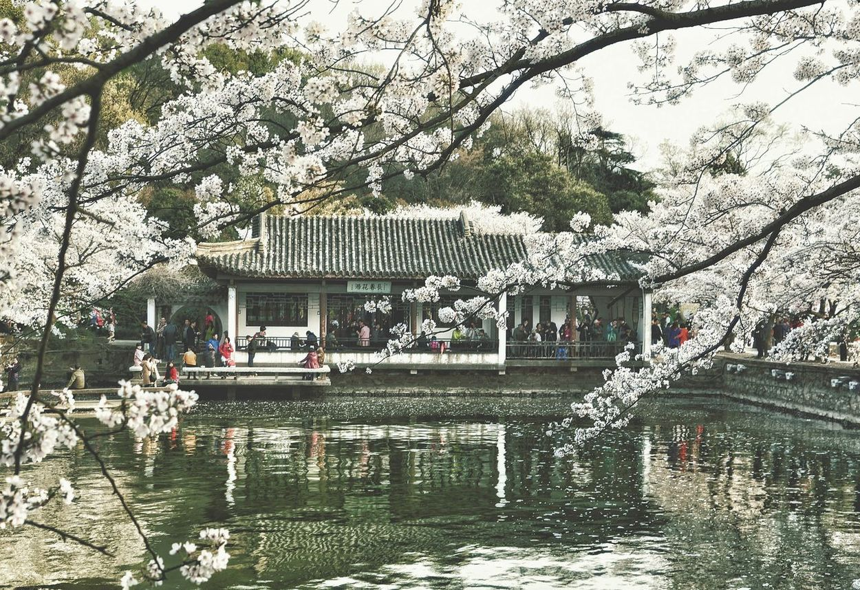 China Photos Cherry Blossoms Garden China Traditional House China Beauty Walking Around Urban Spring Fever People Watching Taking Photos Travel Showcase April Enjoying The Sun Springtime Outdoors Landscape Streamzoofamily The Architect - 2016 EyeEm Awards The Great Outdoors - 2016 EyeEm Awards