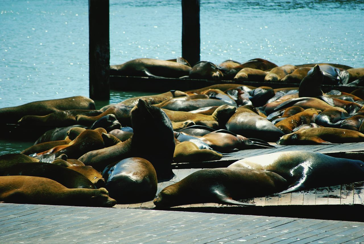 animal themes, animals in the wild, no people, sea, day, relaxation, sunlight, nature, aquatic mammal, outdoors, animal wildlife, large group of animals, lying down, sea life, sea lion, water, beach, mammal, close-up