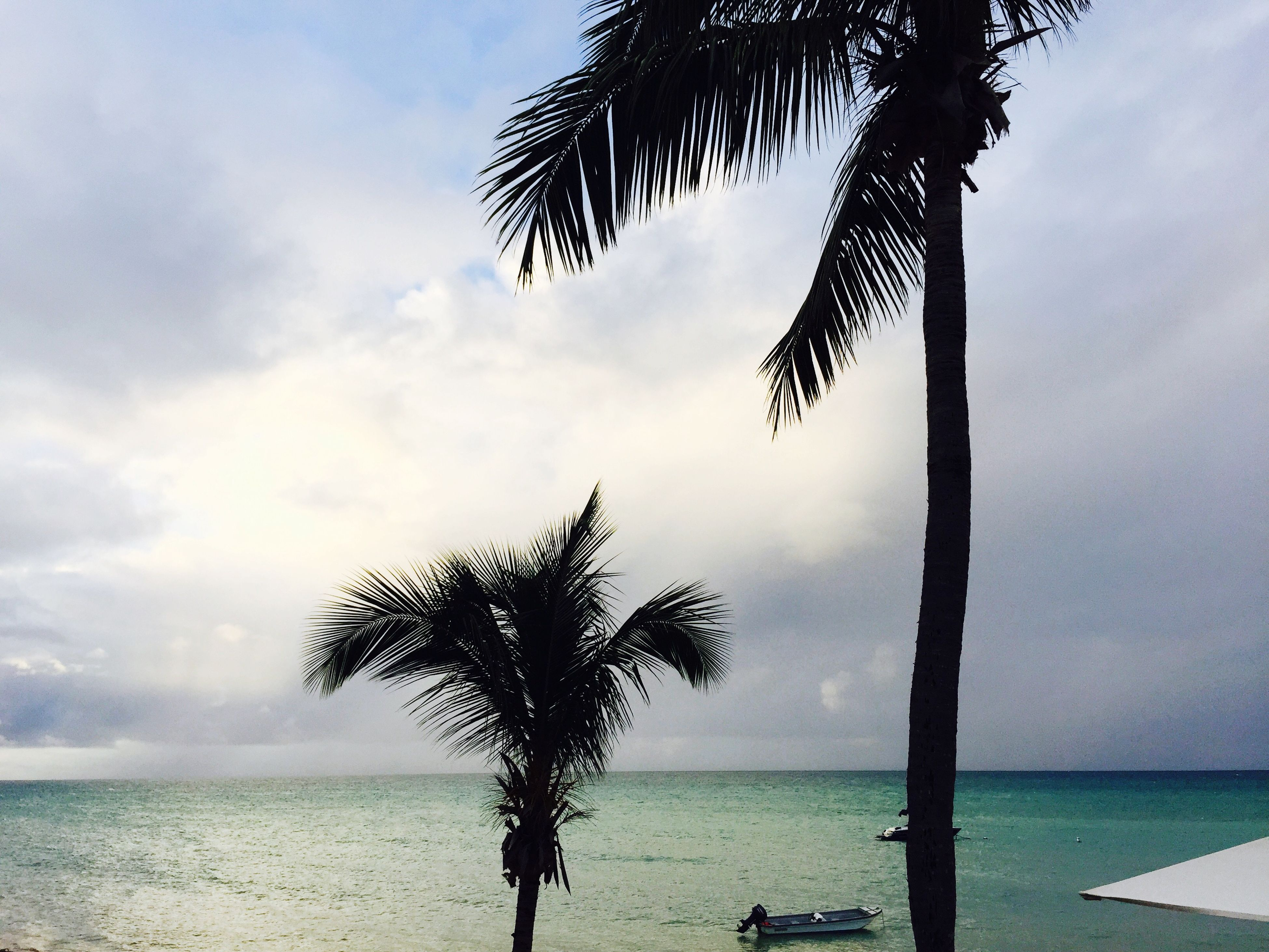 sea, horizon over water, sky, palm tree, water, beach, tranquility, tree, tree trunk, tranquil scene, scenics, shore, beauty in nature, cloud - sky, nature, cloud, silhouette, idyllic, branch, cloudy