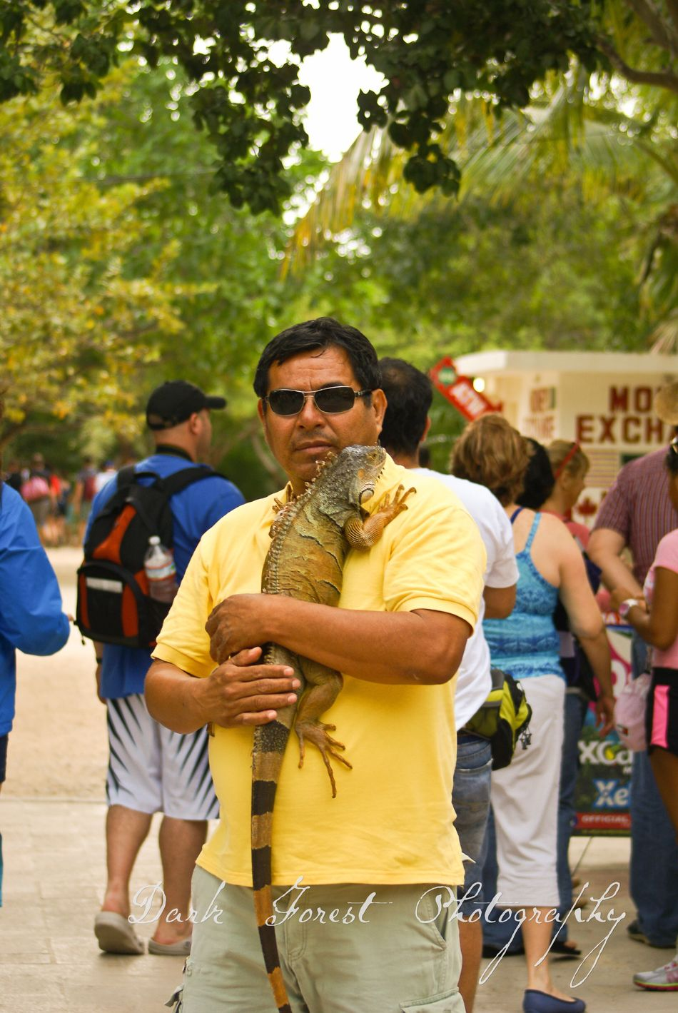 Green friend Lizard Beautiful Only Men Day Ruins Tourist Attraction  Mexico Tulum , Rivera Maya. Cultures Travel Photography Animal Wildlife