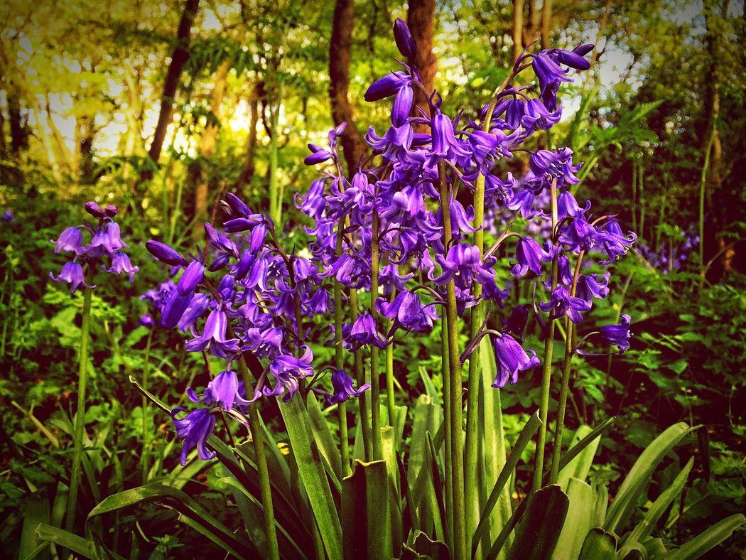 Flowers Wildflowers Purple Violet By Motorola Nature_collection Nature EyeEm Nature Lover Eye4photography  EyeEm Best Shots Spring