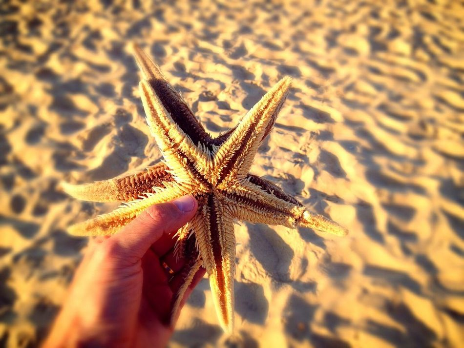 Beautiful stock photos of starfish, Animal Themes, Beach, Beauty In Nature, Cropped