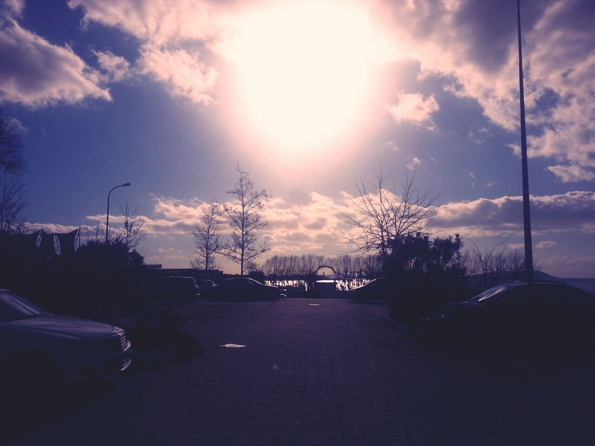 Sea Club Sun Tree
