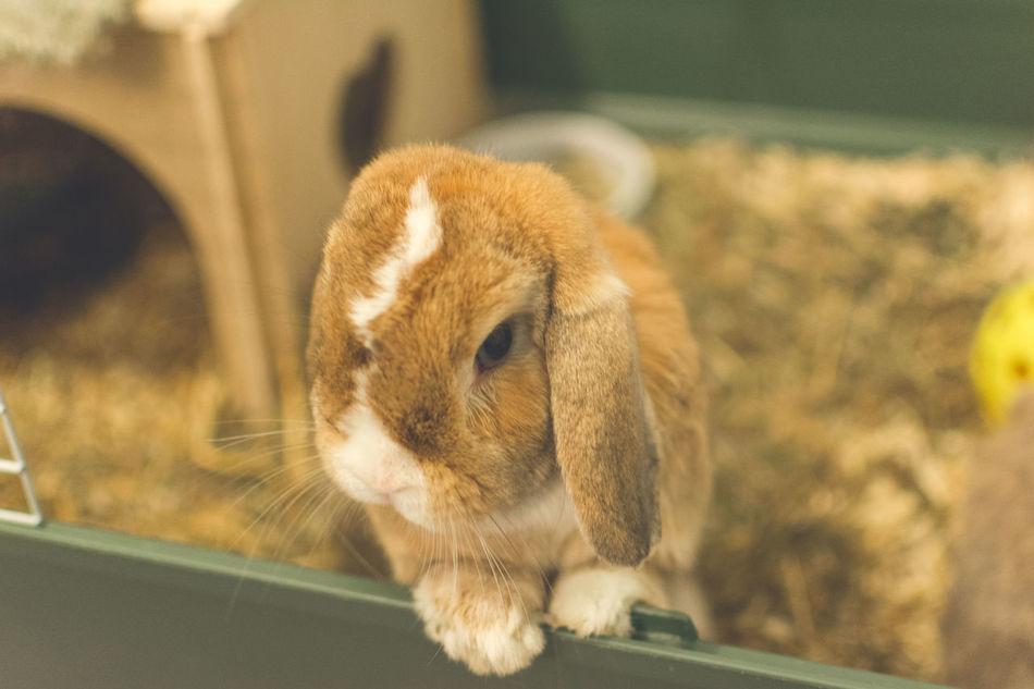 Beautiful stock photos of hasen, High Angle View, animal Head, animal Nose, animal Themes