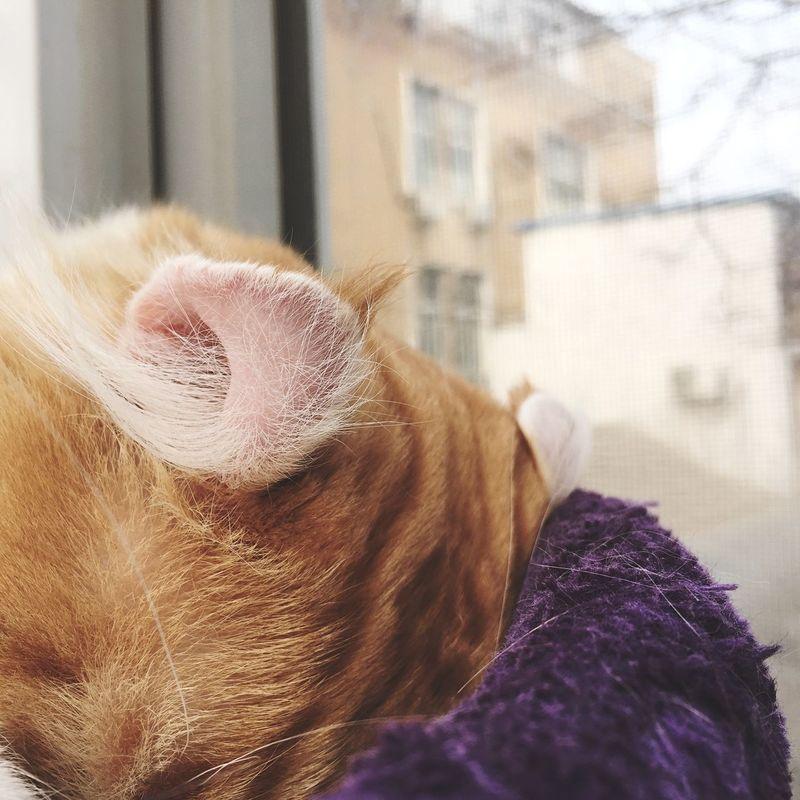 卷耳喵。 Cat