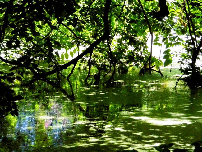 Beauty In Nature Branch Color Palette Day Freshness Green Green Color Growth Lake Lush Foliage Nature No People Non-urban Scene Outdoors Pond Reflection Remote Scenics Standing Water Tranquil Scene Tranquility Tree Tree Trunk Water Waterfront