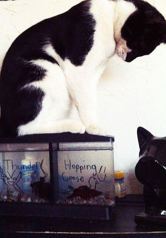 Cat Curiosity Domestic Animals Fish