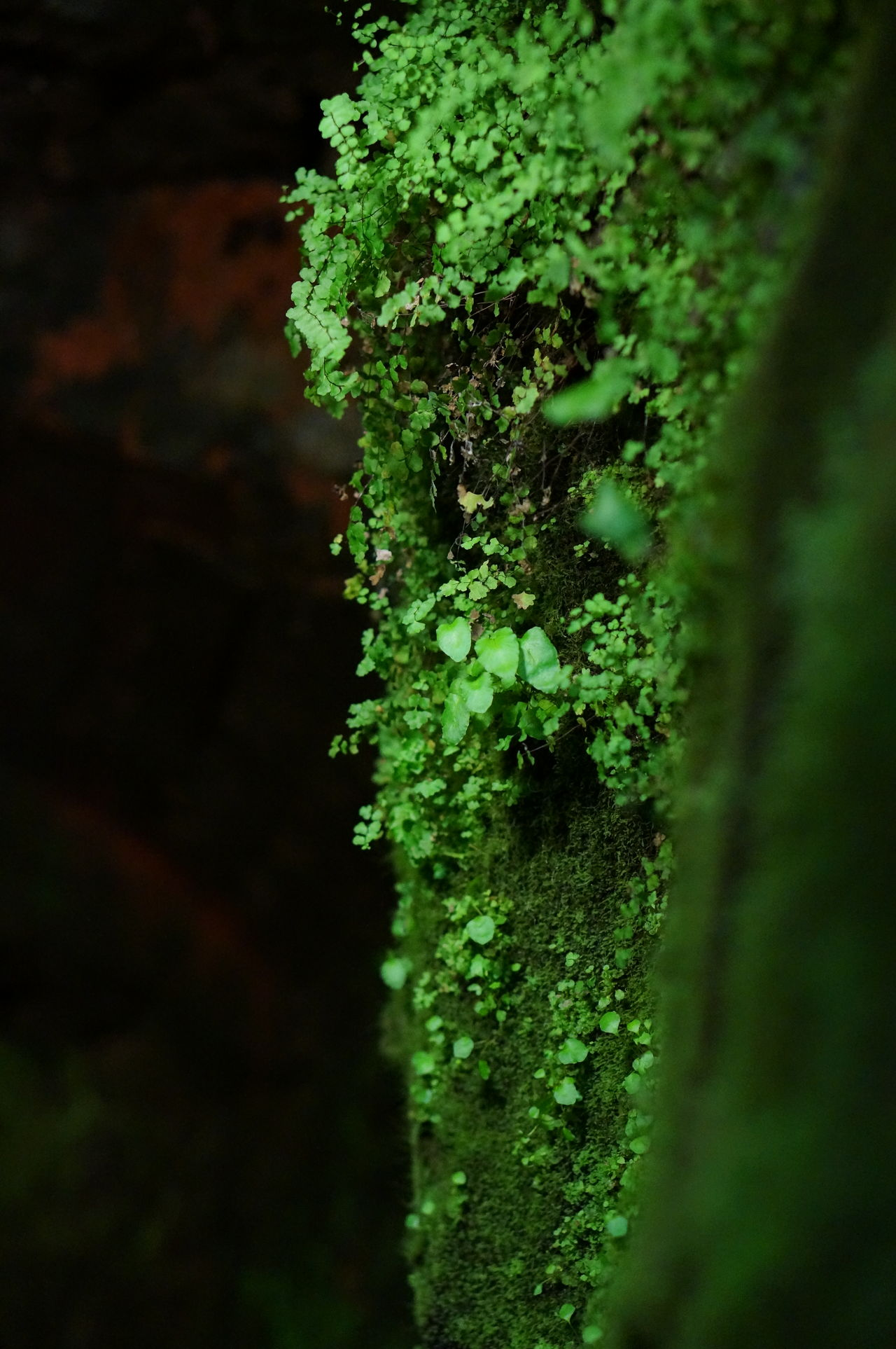 Nature Green Color Growth Beauty In Nature Close-up Grottes Plant Grass