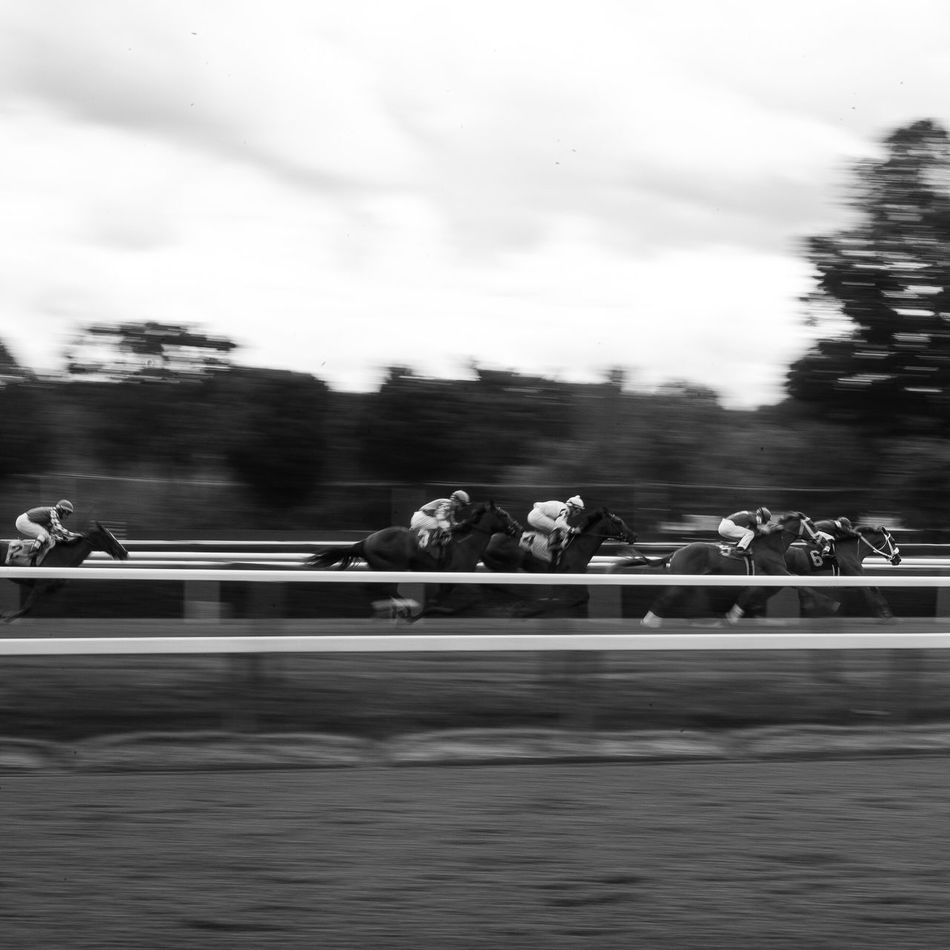 The Saratoga Horse Track! Leica LeicaM9 Animals