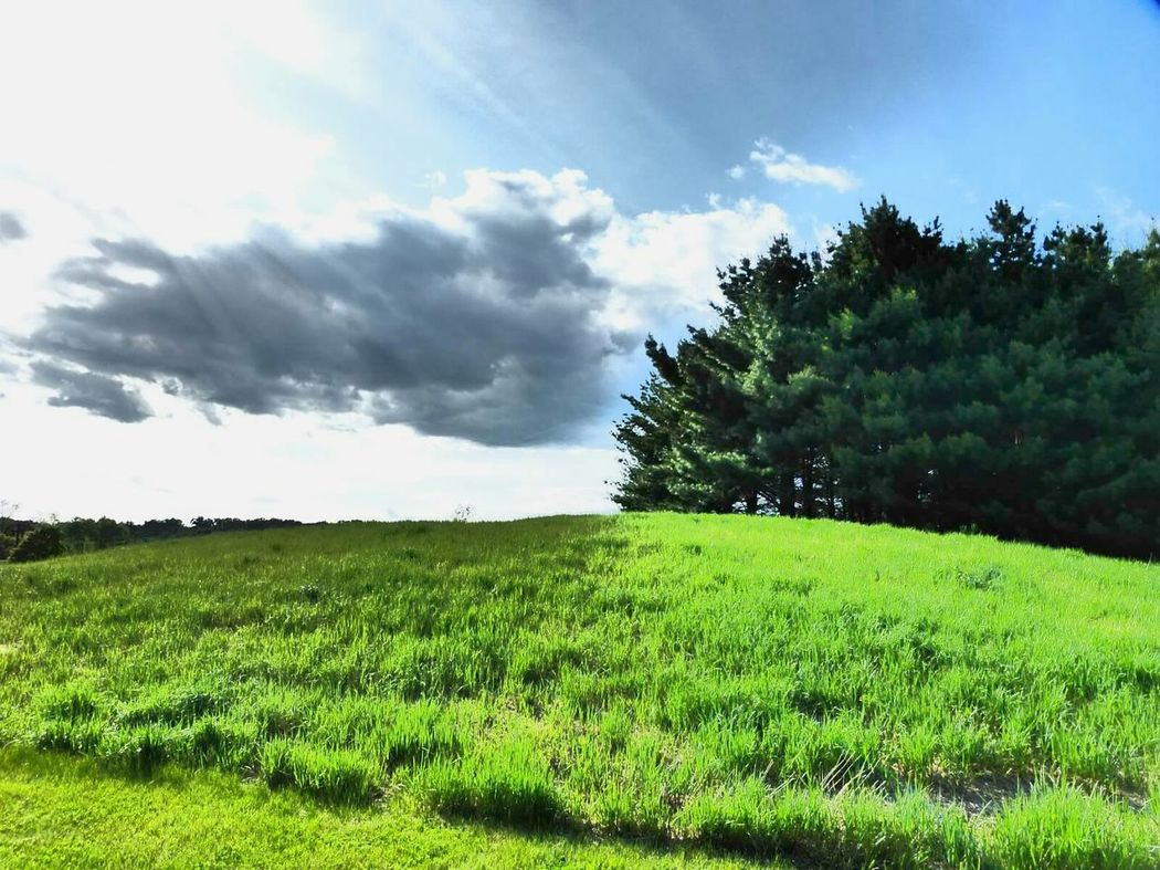 Simple pleasures, green grass, blue sky, fluffy clouds, and trees. Sky And Clouds Treescollection Grassland Cloud_collection  Fluffy Clouds Stormking Pinetrees