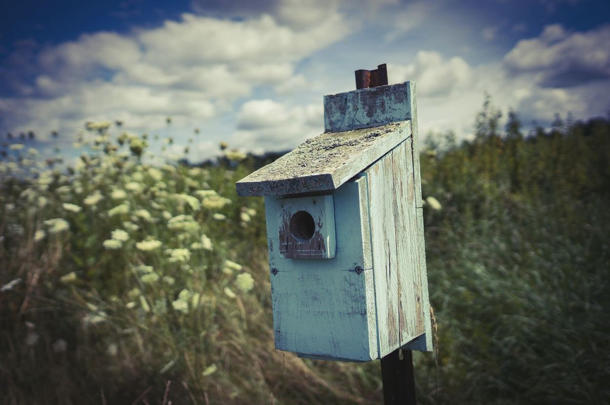 Bird house atnthe bird sanctuary. Pomfret, CT. Pomfret Birds EyeEm Nature Lover Weathered Wood New England