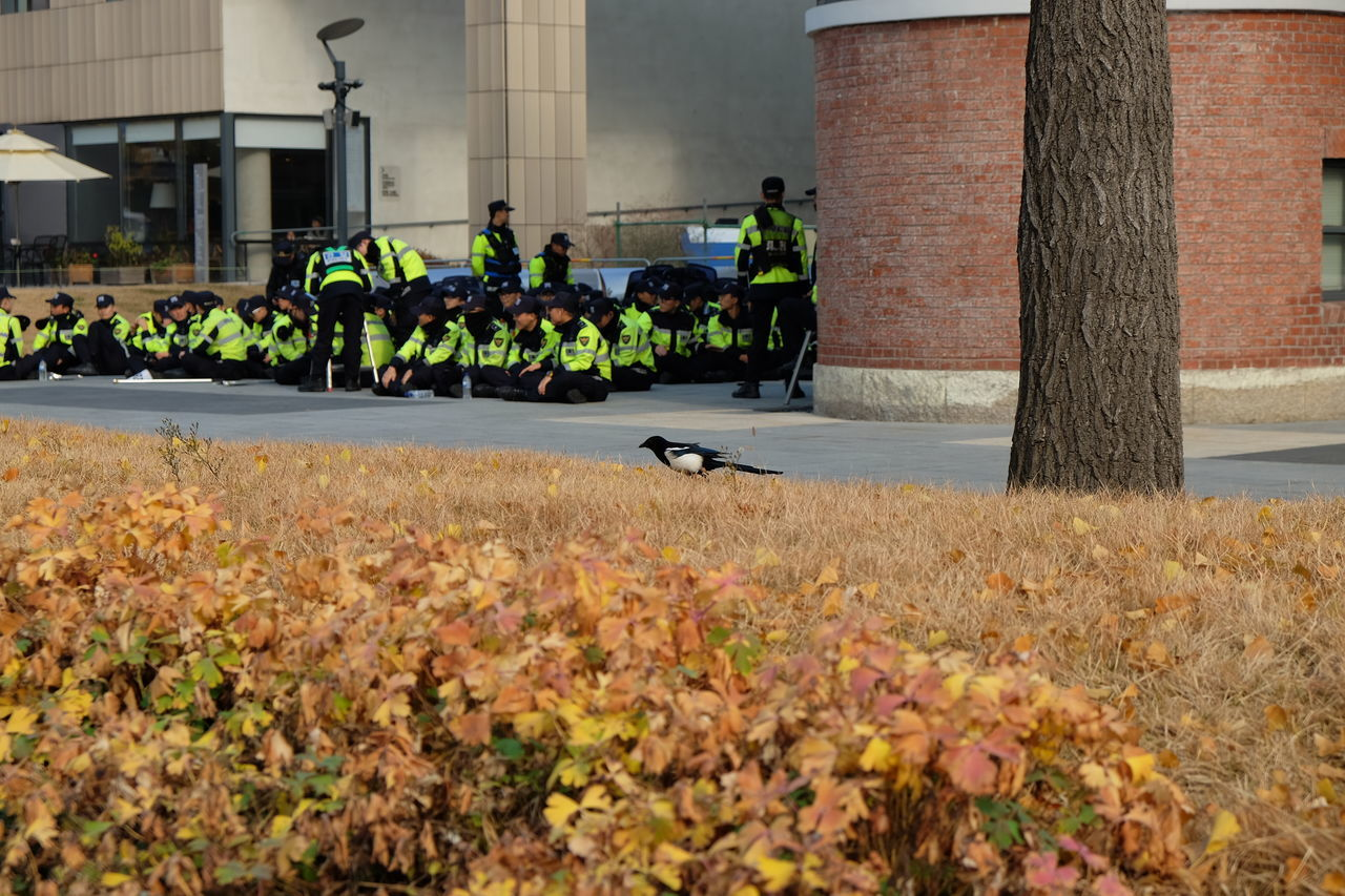 The bird is looking for a food, behind it is a group of Korean police gathering to stop the protest Bird Day Korean Large Group Of People Mammal Men Outdoors People Police Protesters Real People The Photojournalist - 2017 EyeEm Awards