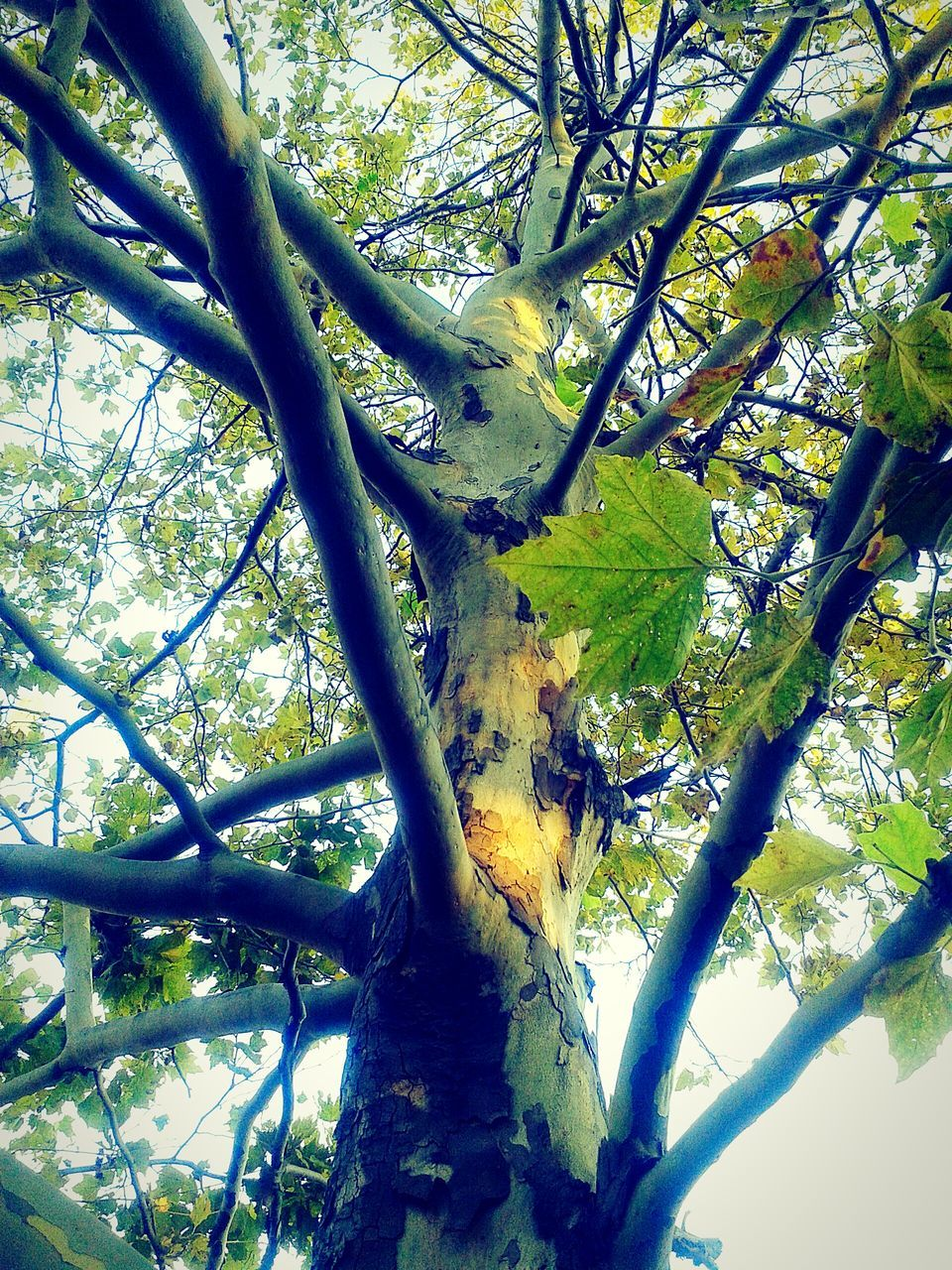 tree, branch, growth, nature, day, beauty in nature, no people, green color, outdoors, tranquility, low angle view, tree trunk, fragility, freshness