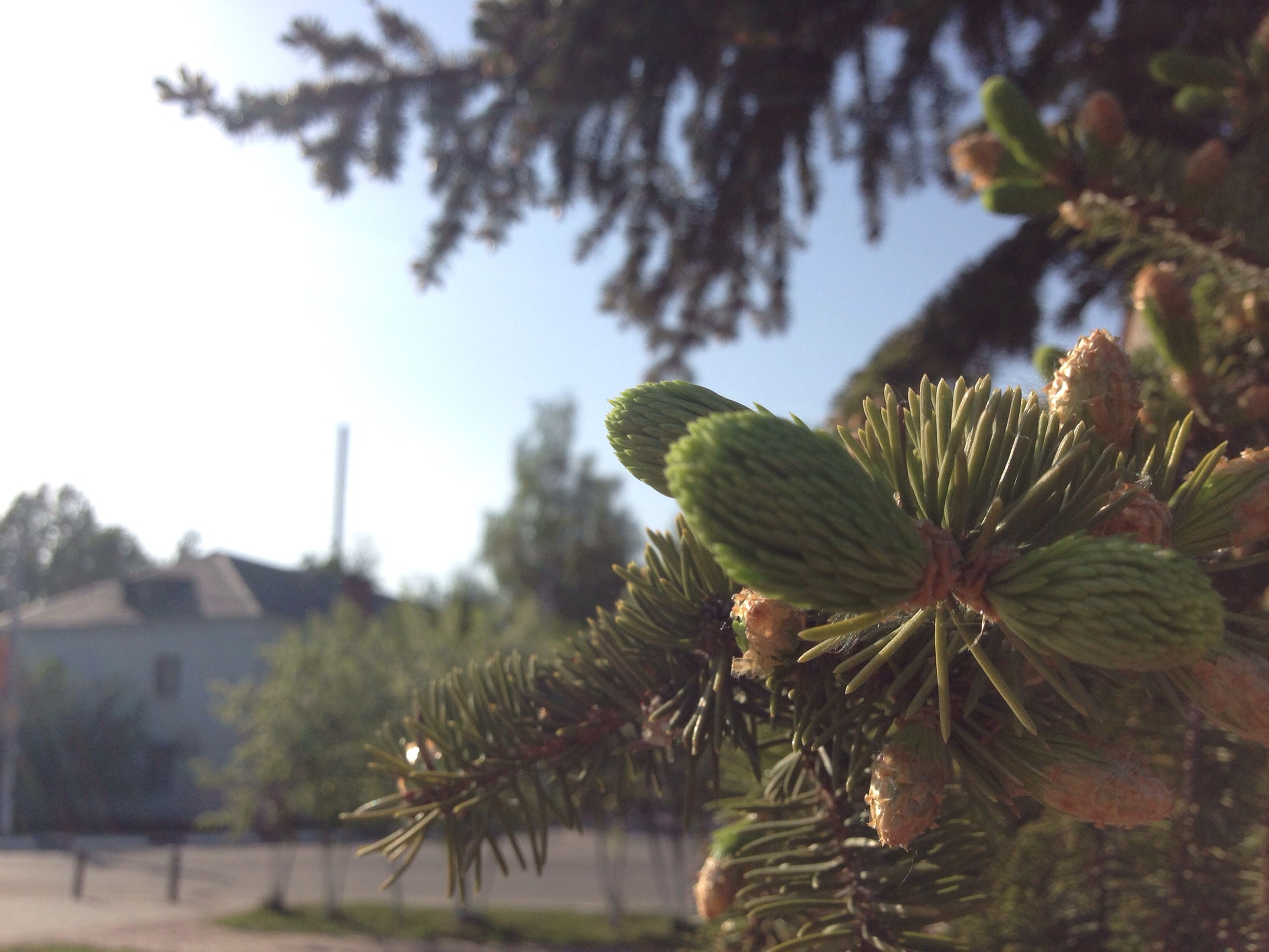 growth, focus on foreground, leaf, plant, nature, flower, tree, close-up, beauty in nature, fragility, freshness, green color, tranquility, branch, sky, day, water, outdoors, stem, growing