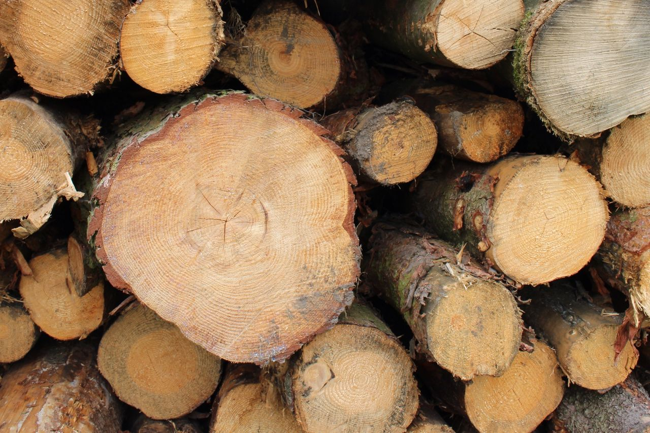 Closer Full Frame Pile Lumber Industry Firewood Log Deforestation Woodpile Stack Wood - Material Textured  Close-up Large Group Of Objects Backgrounds Heap Forestry Industry Timber Tree Trunk