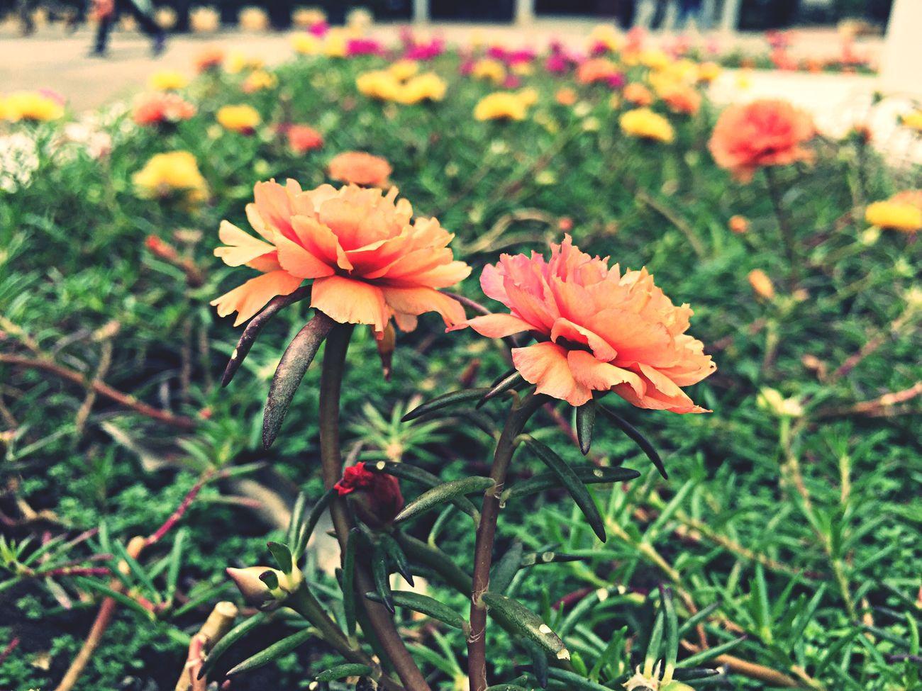 Flower ??