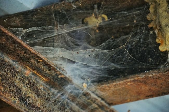 Cobwebs... Nature Outdoors No People South Louisiana Boat Dock Cobwebs Neglected Architecture Metal Structure