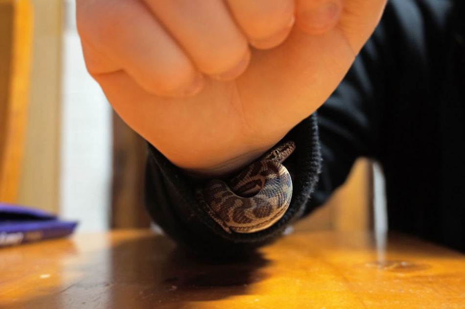 Beautiful stock photos of snakes, Animal Markings, Animal Themes, Animal Wildlife, Close-Up