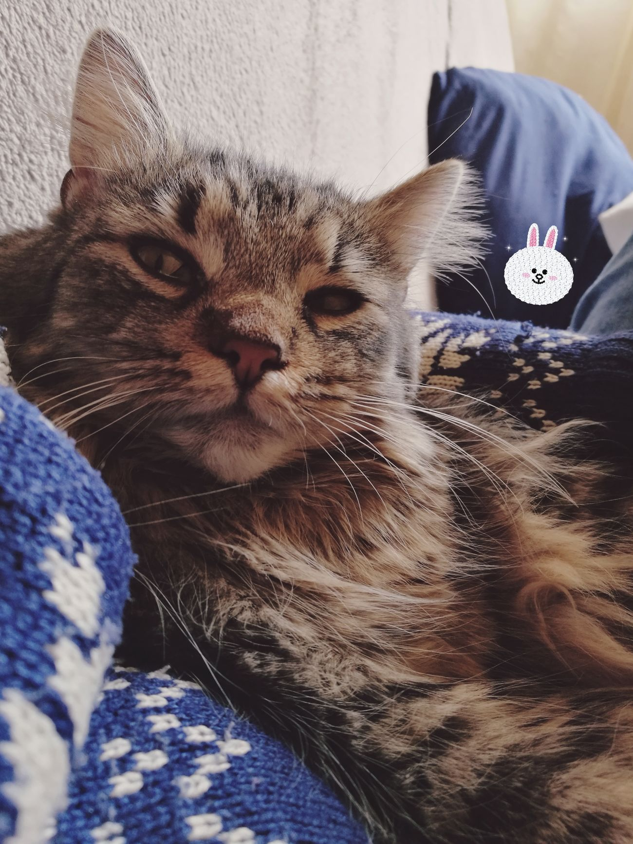 Bubu CDRE Cats Cat Cat Lovers Cats Of EyeEm Mainecoon Pet Furry Hairy  Pets Feline Portrait Cute Cute Pets Tabby Cat AdoptDontShop Eye4photography  HuaweiP9 Huaweiphotography Animal Love Chill Relaxing Cozy Whiskers