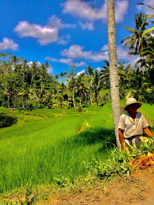 Bali INDONESIA Ubud Green Color Byontherockss